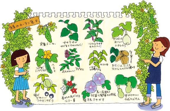 色々あるよ、つる植物