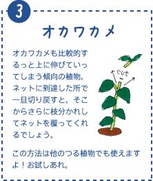オカワカメも比較的するっと上に伸びていってしまう傾向の植物。ネットに到達した所で一旦切り戻すと、そこからさらに枝分かれしてネットを覆ってくれるでしょう。この方法は他のつる植物でも使えますよ!お試しあれ。