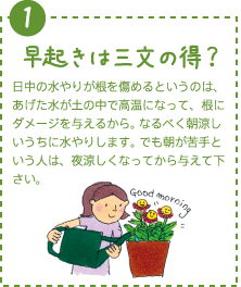 早起きは三文の得?日中の水やりが根を傷めるというのは、あげた水が土の中で高温になって、根にダメージを与えるから。なるべく朝涼しいうちに水やりします。でも朝が苦手という人は、夜涼しくなってから与えて下さい。