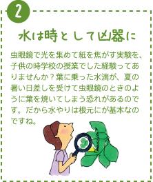水は時として凶器に。虫眼鏡で光を集めて紙を焦がす実験を、子供の時学校の授業でした経験ってありませんか?葉に乗った水滴が、夏の暑い日差しを受けて虫眼鏡のときのように葉を焼いてしまう恐れがあるのです。だから水やりは根元にが基本なのですね。